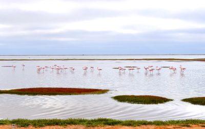 Fenicotteri Walvis Bay Namibia