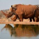 Viaggi Organizzati in Namibia Ottobre 2019