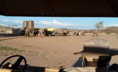 Elefanti del deserto - Namibia