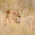 Tour Namibia il sogno nel cassetto – Febbraio 2020