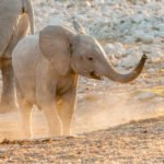 Tour organizzato in Namibia per Pasqua 2020