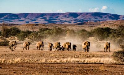 Tour Organizzato Namibia Special 2020