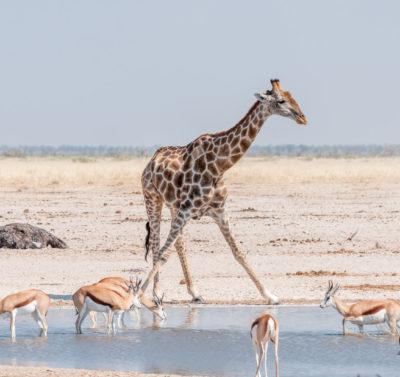 Viaggio organizzato in Namibia con guida italiana per Capodanno e Epifania 2020