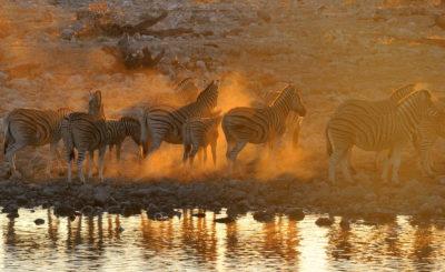 Namibia Viaggio Capodanno 2020 Epifania