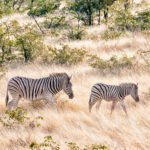 Tour Namibia Luglio 2020 con guida italiana