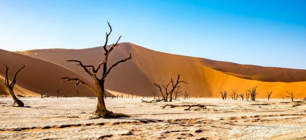 Viaggio di gruppo in Namibia
